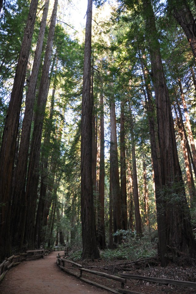 Muir Woods National Monument (6/6)