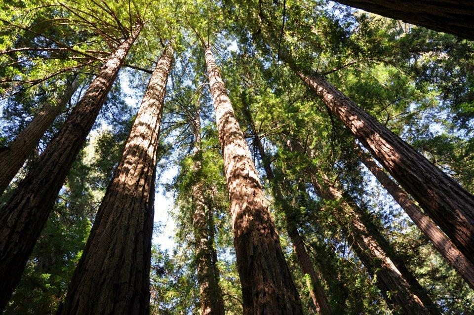 Muir Woods National Monument (2/6)